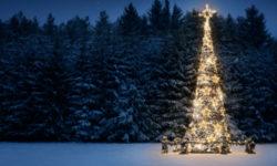 christmas_tree_623