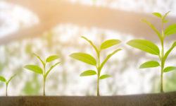 Growing_Plants_623