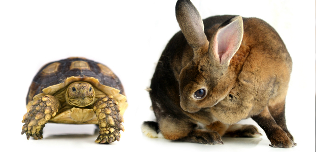 Turtle_Hare_623